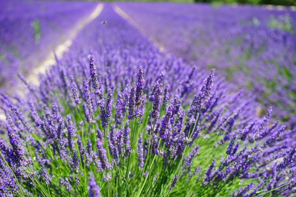 Ätherische Öle und Aromatherapie